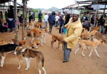 People around the world have signed a petition to stop Nigerians from eating dogs.jpg